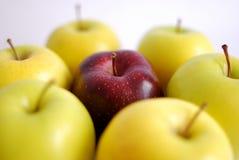 окруженный красный цвет яблока Стоковая Фотография
