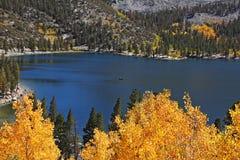 окруженный озером желтый цвет валов Стоковое Изображение RF