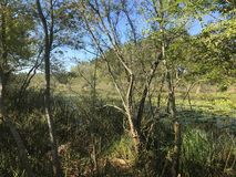 ОКТЯБРЬ 2018, лес болота Турции во-вторых самый большой пресноводный: Acarlar в Sakarya, Турции стоковое изображение