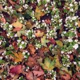 октябрь Стоковое Фото