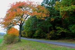 октябрь Стоковые Изображения RF
