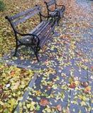 октябрь Стоковая Фотография