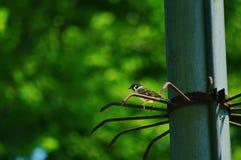 Окунь птицы на электрической башне Стоковое Изображение