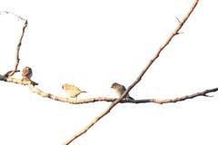 Окунь птиц на ветвях дерева Стоковые Фотографии RF