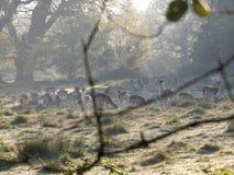 Олени в Глен стоковое фото