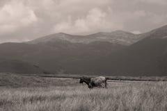 Олени в горах стоковое изображение