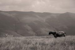 Олени в горах стоковое фото