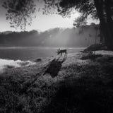 Олени в лесе ночи Стоковое Фото