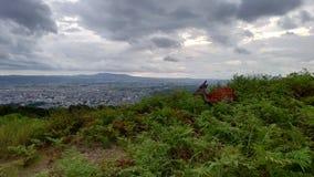 Олени на верхней части горы стоковая фотография rf