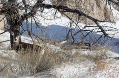 олени неплодородных почв Стоковое фото RF