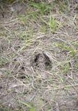 Олени отслеживают в траву Стоковые Фото