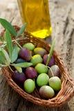 оливка ветви корзины Стоковые Изображения RF
