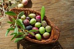 оливка ветви корзины Стоковое фото RF