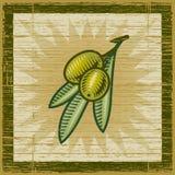 оливка ветви ретро Стоковые Изображения