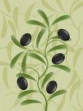 оливка ветви бесплатная иллюстрация