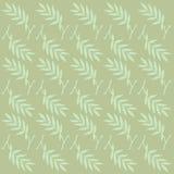 оливка зеленого света Стоковые Фотографии RF