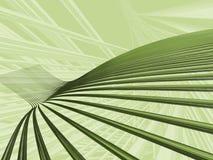 оливка мягкая Стоковые Фото