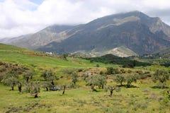 оливка рощи gree Крита Стоковые Фото