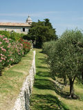 оливка сада franche Стоковая Фотография RF