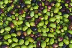 оливка Стоковое фото RF