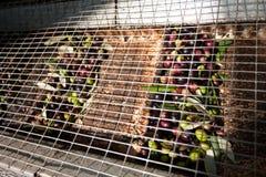 Оливки в конвейерной ленте Стоковая Фотография RF