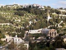 оливки горы Стоковые Фотографии RF