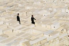 оливки держателя кладбища еврейские Стоковые Фотографии RF