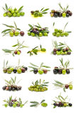 оливки собрания свежие стоковые фото