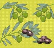 оливки иллюстрация вектора