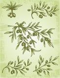 Оливковая ветка сбора винограда Стоковое фото RF