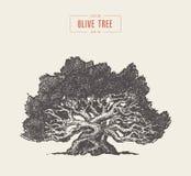 Оливковое дерево высокой детали, нарисованная рука, вектор иллюстрация вектора