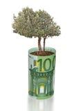 оливковое дерево счета растущее Стоковое Изображение RF