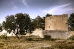 оливковое дерево hdr Стоковые Изображения
