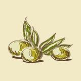 Оливковое масло иллюстрация вектора