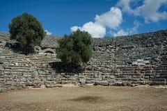 Оливковые дерева, который выросли от между мест античного amphithea стоковое изображение