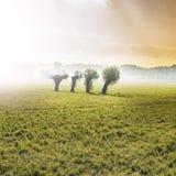 Оливковые дерева на поле Стоковые Изображения