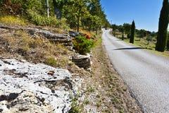 Оливковые дерева на холмах Тосканы Стоковое Фото