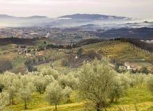 оливковые дерева Стоковая Фотография RF