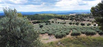 Оливковые рощи в Провансали, к югу от Франции стоковое фото rf