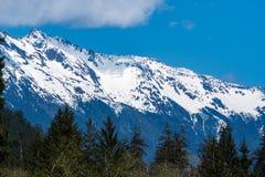 Олимпийские горы вдоль тропического леса Hoh стоковое изображение