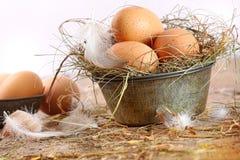 олово плиты пер коричневых яичек старое Стоковая Фотография