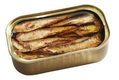 олово рыб Стоковые Фотографии RF