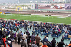 олово sha racecourse Hong Kong Стоковые Фотографии RF
