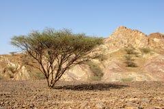 Оманская равнина гравия Стоковые Изображения