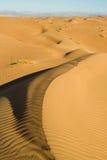Оман зашкурит wahiba Стоковое фото RF