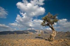 Оман Стоковые Фото