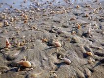 Оман, Salalah, gastropods и наяды на бечевнике стоковые фото
