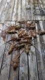 Омары на беге Стоковая Фотография RF