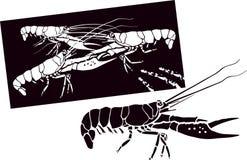 омары Стоковые Изображения