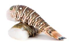 омар сырцовый Стоковое Фото